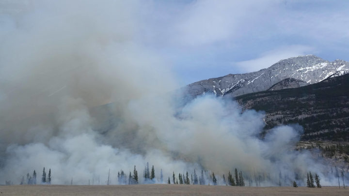 Varying the Difference: Fire Gel vs Fire Foam for Wildfire Protection